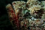 Stone fish head
