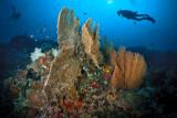 Sipadan reefscape