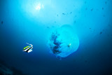 Jellyfish snack