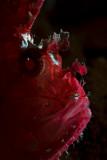 Leaffish profile