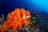 Sahaung 2 corals