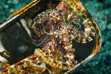 Mototi octopus before getting pissed off