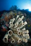 Menjangan sponge
