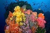 Sahaung reefscape