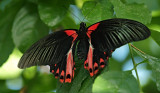 cambridge_butterfly_conservatory