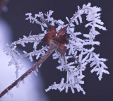 Winter Garden - Frozen