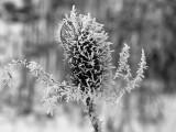 Winter Garden - Alone