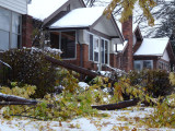 It looked like a lot of damage on the ground, the roof and in the tree