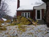 Big branch down
