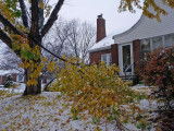 The whole front yard filled with broken branches