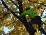 Getting to the damaged branches