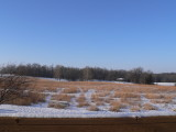 Tall grass prairie