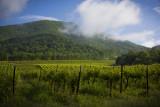 Franklin County Vineyard- AmRhein Wine Cellars