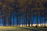 Fall Tree Line-Giles County