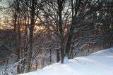 Morning Light-Blacksburg