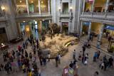 Natural History Lobby