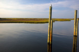 Leaning Poles On The Sound Side In Hatteras