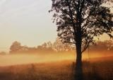 Morning Fog: Blacksburg