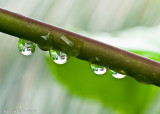 Water Drops - Linscott Ave, St Andrew