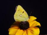 Cleo_VIS_P1460179cs_c.jpg