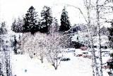 Freezing trees