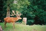 woods, forest & animals