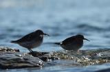 Année ornithologique 2011