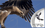 Kgalagadi 2011 The Year of the Eagles