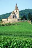 35 Unawhir l'église fortifiée au milieu des les vignes