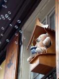 267 Ours faisant des bulles de savon