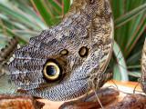 Visite de la serre aux papillons du petit village d'Unawhir