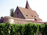 315 Unawihr - l'église fortifiée depuis les vignes
