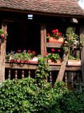 356 Découverte du village de Turckheim