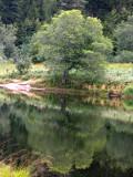 423 Tourbière flottante du lac de Blanchemer