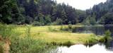 431 Tourbière flottante du lac de Blanchemer