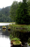 436 Tourbière flottante du lac de Lispach