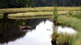 437 Tourbière flottante du lac de Lispach