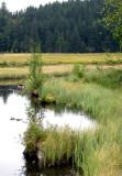 438 Tourbière flottante du lac de Lispach