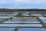 Marais salants de la presqu'île Guérandaise - MK3_4469_DXO.jpg