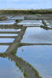 Marais salants de la presqu'île Guérandaise - MK3_4470_DXO.jpg