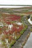 Marais salants de la presqu'île Guérandaise - IMG_0243_DXO.jpg