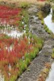 Marais salants de la presqu'île Guérandaise - MK3_4483_DXO.jpg