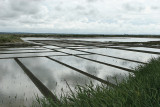 Marais salants de la presqu'île Guérandaise - IMG_0244_DXO.jpg