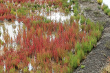 Marais salants de la presqu'île Guérandaise - MK3_4485_DXO.jpg