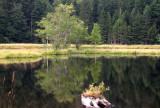 440 Tourbière flottante du lac de Lispach