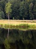 442 Tourbière flottante du lac de Lispach