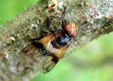 445 Lac de Lispach - Insecte