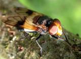 446 Lac de Lispach - Insecte