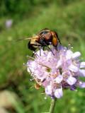 448 Lac de Lispach - Insecte