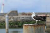 Port de la Turballe - MK3_4515_DXO.jpg